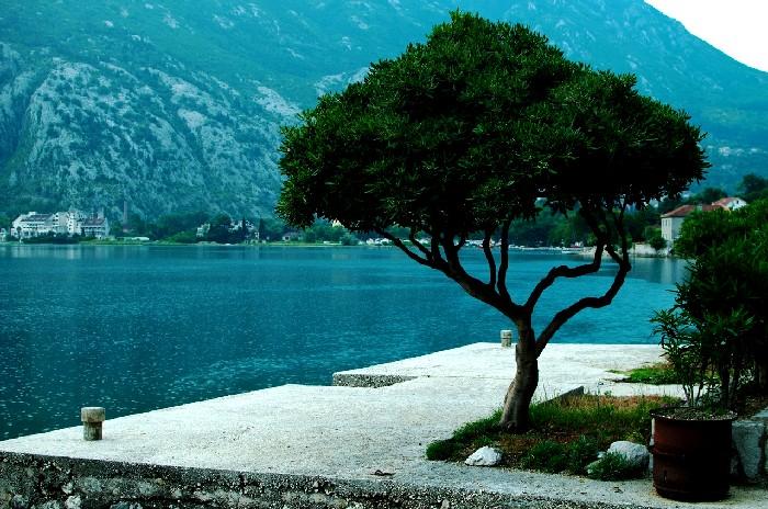 Отдых в Черногории, цены 2 16 на отдых в отелях